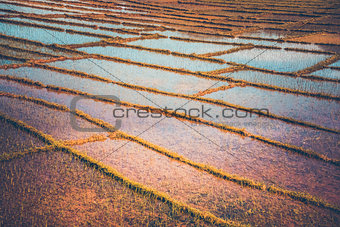 Rice plantation in Nepal