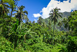 Moorea island jungle and mountains landscape view