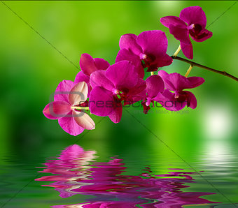 Beautiful orchid and water surface