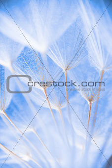 Abstract macro photo of plant seeds at a morning