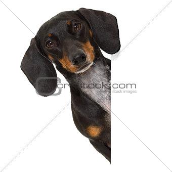 dachshund sausage dog banner