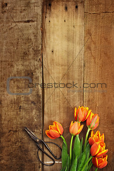 Antique Scissors and Tulips