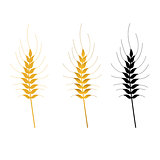wheat vector isolated set