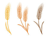 colorful wheat