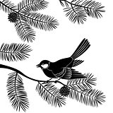 Bird Titmouse on Pine Branch, Cutout