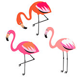 Flamingo flat style vector illustration.