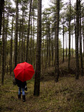 Red Umbrella in the Woods
