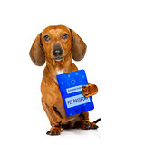 dog with european pet  passport