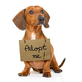 homeless dog to adopt