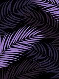 Beautifil Palm Tree Leaf  Silhouette Background Vector Illustrat