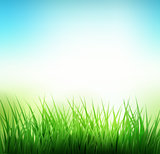 Natural green grass background