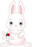 Cute Bunny Holds Lady Bug