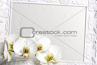 frame with white orchids