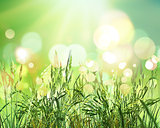 3D green wheat on bokeh lights background