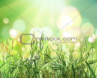 3D green wheat on bokeh lights background