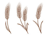 isolated wheat ears set