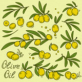 isolated olive branches set