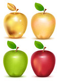 Set of red, yellow, green and gold apple on white background
