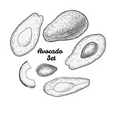 Hand drawn engraved avocado set isolated on white background.