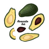 Hand drawn engraved colorful avocado set isolated on white background.
