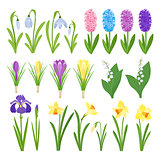Spring flowers. Irises, lilies of valley, tulips, narcissuses, crocuses and other primroses. Garden design icons isolated on white background