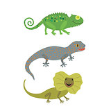 Different kind of lizards icons set.