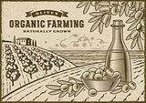 Olive Organic Farming Landscape