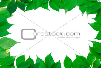 Green leaves frame isolated on white background
