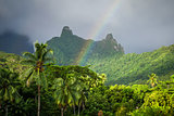 Rainbow on Moorea island jungle and mountains landscape