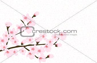 Abstract Floral Sakura Flower Japanese Natural Background Vector
