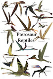 Pterosaur Reptiles