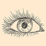 Human eye sketching