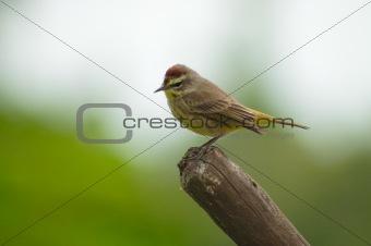 Small bird perching