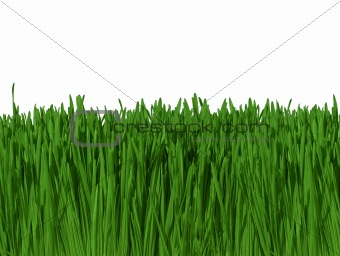 Background of Green Grass Against Blue Sky (macro focus)  300dpi