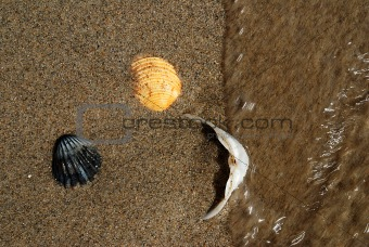 Three shells in the sea