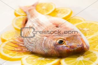 Dorado on a lemon