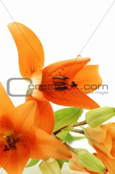 abstract close up of orange lilies bouquet