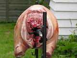 Spit roasting whole pig