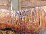 Charred flesh of a spit roasted pig