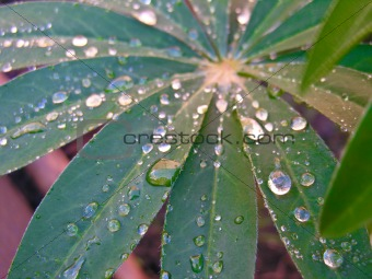 Close up of rain drops on a green leaf