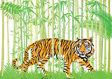 Tiger in the bamboo jungle