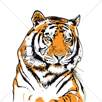 Tiger head illustration isolated on white
