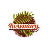 Rosemary Spice. Vector Illustration.