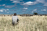 Photographer and group of zebras in Serengeti National Park