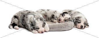 Group of crossbreed puppies in a crib isolated on white