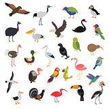 big vector birds set