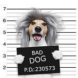 nerd silly dog mugshot