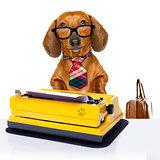 office worker boss dog