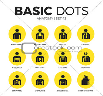 Anatomy flat icons vector set