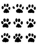 footprints of rabbits